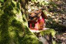Irish Fairy Trails