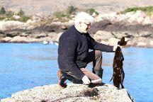 Atlantic Irish Seaweed, Caherdaniel, Ireland