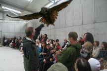 Eagles Flying, Ballymote, Ireland