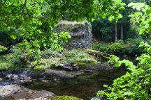 Glengarriff Nature Reserve, Glengarriff, Ireland