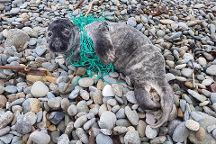 Seal Rescue Ireland, Courtown, Ireland