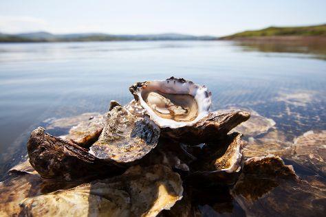 DK Connemara Oysters, Dawros More, Ireland