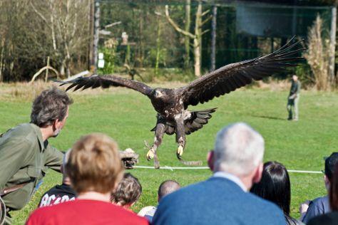 Eagles Flying, Sligo, Ireland