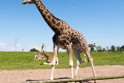 Fota Wildlife Park, Carrigtwohill, Ireland