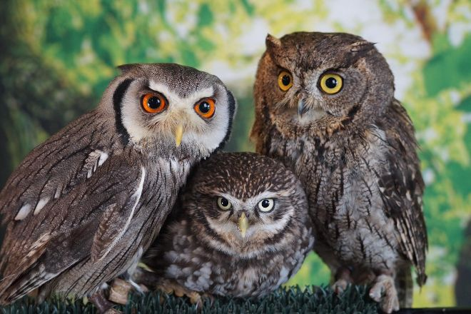 Birds of Prey Educational Centre, Midleton, Ireland