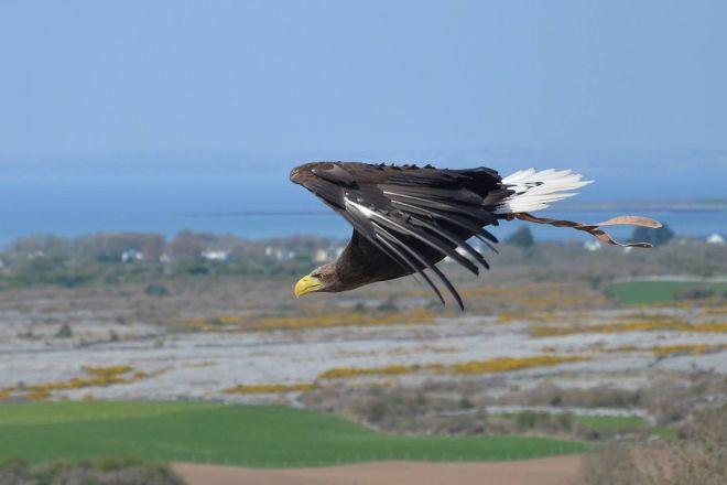 Burren Birds of Prey Centre, Ballyvaughan, Ireland