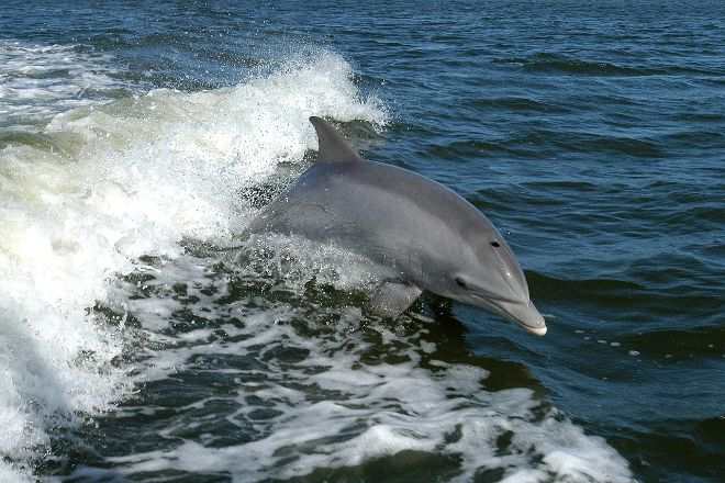 Shannon Dolphin and Wildlife Centre, Kilrush, Ireland