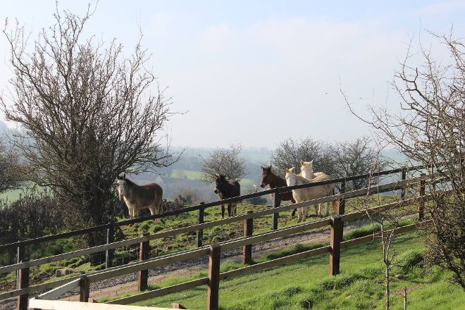 The Donkey Sanctuary, Mallow, Ireland
