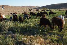 The Alpaca Farm, Mitspe Ramon, Israel