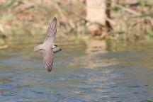 The International Birding & Research Centre, Eilat, Israel