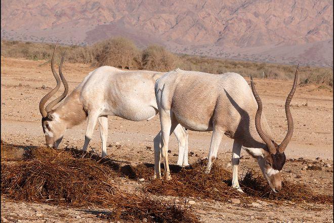 Antelope Ranch in the Arava Valley, Mahane Zofar, Israel
