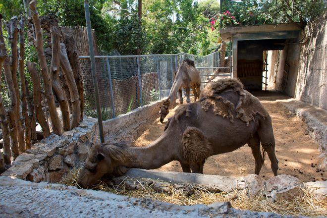 Haifa Educational Zoo, Haifa, Israel