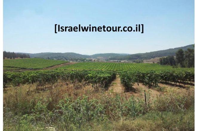 Israel Wine Tour, Tel Aviv, Israel