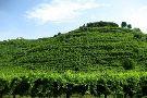 Bressan Daniele Winery