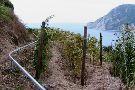 Cinque Terre footpaths