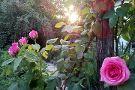 Il Giardino del Chiostro