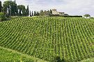 Scenic wine tours in Tuscany