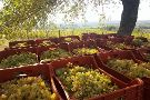 Tenuta Macellaro Winery