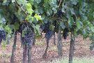 Wine Travel Italy