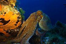 Asinara Scuba Diving