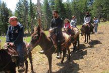 Etna Donkey Trekking, Linguaglossa, Italy