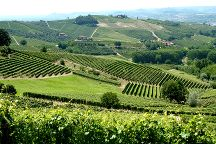 Langhe landscapes UNESCO, Alba, Italy