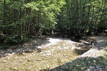 Parco Nazionale delle Foreste Casentinesi, Monte Falterona e Campigna, Pratovecchio, Italy