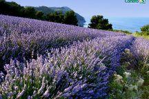 Riviera del Conero e Colli dell'Infinito, Sirolo, Italy