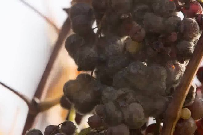 Barberani Wine, Baschi, Italy