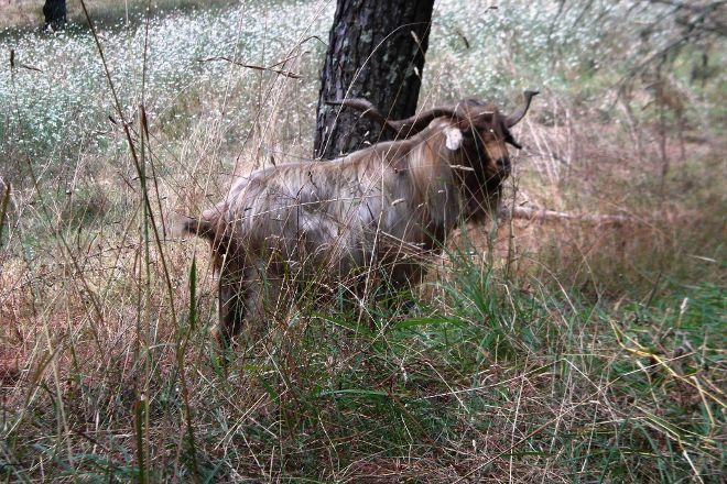 Chianti Cashmere Goat Farm, Radda in Chianti, Italy