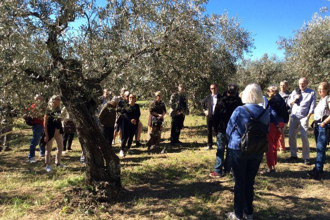 Convivio Rome - Olive Oil Tour, Rome, Italy