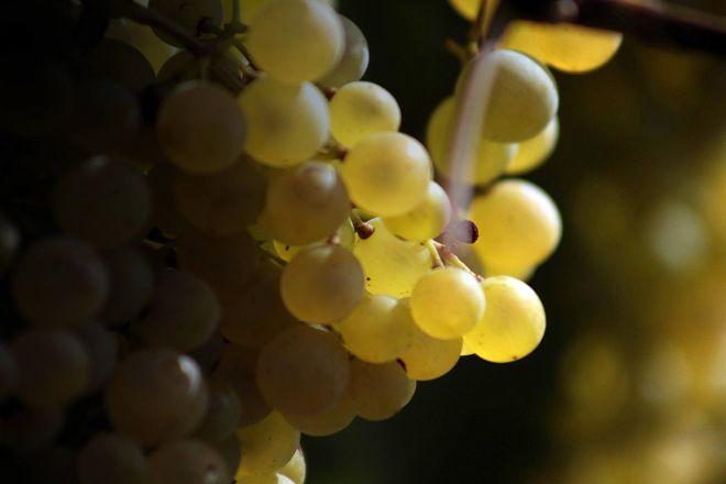 Giusti Wine, Nervesa della Battaglia, Italy