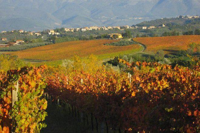 Gusto Wine Tours, Montefalco, Italy