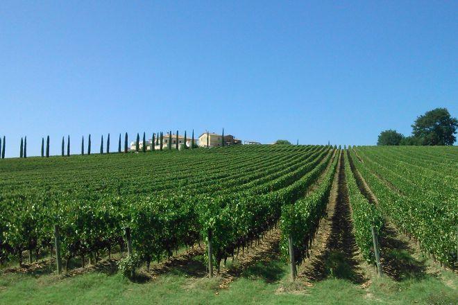 Umbria Wine Tour, Tordandrea, Italy