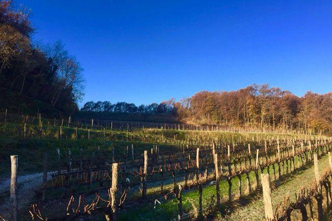 Weingut Ronco Dei Tassi, Cormons, Italy