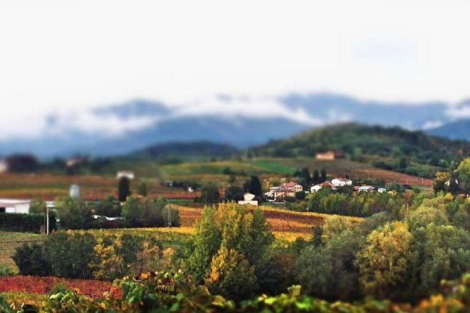 Zorzettig Vini, Cividale del Friuli, Italy