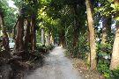 Bise no Fukugi Tree Road