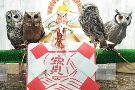 Owlpark Owl Cafe Ikebukuro tokyo