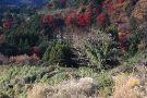 Yoro Valley
