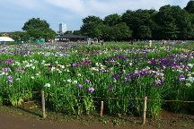 Hachikokuyama Ryokuchi, Higashimurayama, Japan