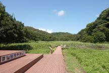 Koajiro Forest, Miura, Japan