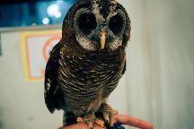 Owl Family Osaka, Osaka, Japan