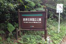 Rhizophoraceae Plant Community of Fukidogawa River, Ishigaki, Japan
