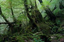 Shiratani Unsuikyo Valley