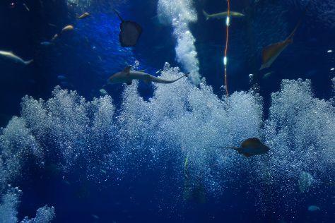 Aqua World Ibaraki Prefectural Oarai Aquarium, Oarai-machi, Japan