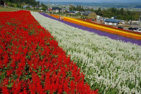 Choei Lavender Farm, Nakafurano-cho, Japan