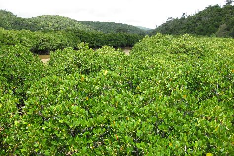 Gesashi Bay's Mangrove Forest, Higashi-son, Japan