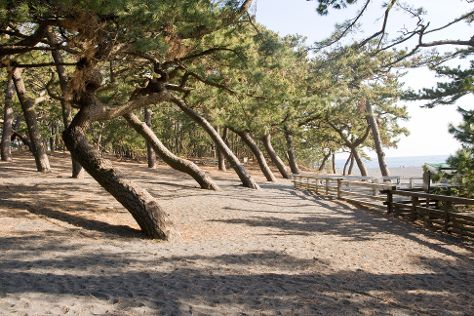Miho Seacoast (Miho no Matsubara Beach), Shizuoka, Japan