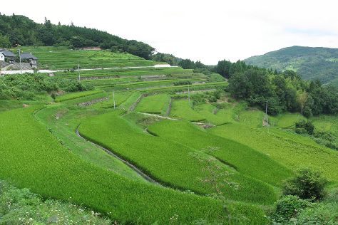 Oyama Rice Terraces, Kamogawa, Japan