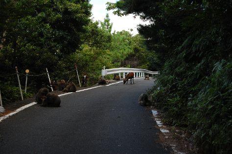 Seibu Trail, Yakushima-cho, Japan